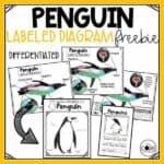 Penguin Freebie Cover